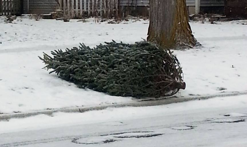 Christmas Tree Pickup Stock Image